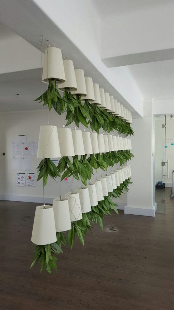 Sky Planters in Cape Town